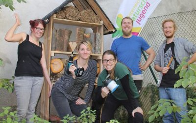 Insektenhotel, 5 Sterne, in Wien Neubau sucht Bewohner