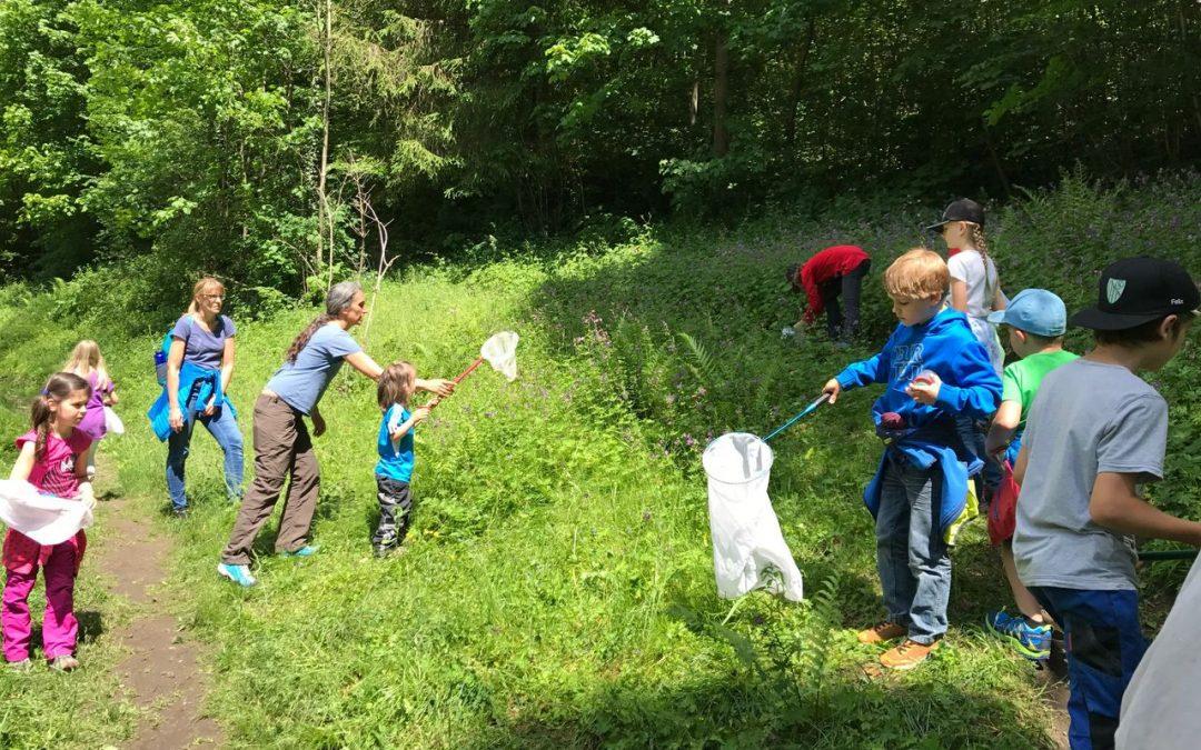Dicke-Brummer – Wildbienenprojekt in Tirol