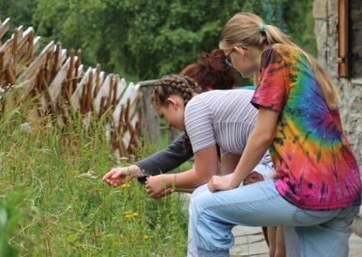 Projekt Aufblühn Auf der Pflanzensuche