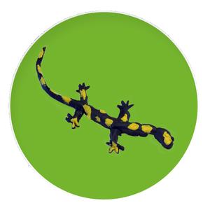 Gruppe Salamander Thalgau